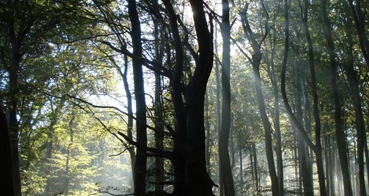 Polscy leśnicy w Austrii